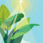 小学生、6年生の理科「植物の成長と日光」の授業の流れはこれ!実際に行った授業を紹介します!