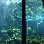 静岡市で幼児が楽しめるスポットはここ!半日楽しめる三保の水族館がおすすめ!
